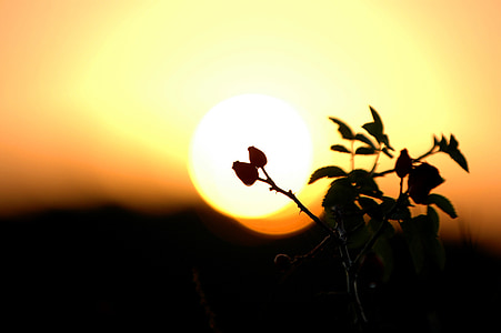 silhouette photo of flower