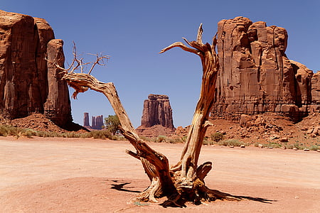 photo of dried trunk
