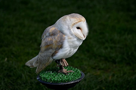 white and gray owl perched on grass