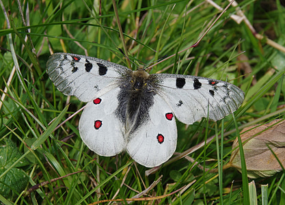 gray and black butterfly on top of green grass during daytime