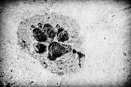 paw print on black and white photography