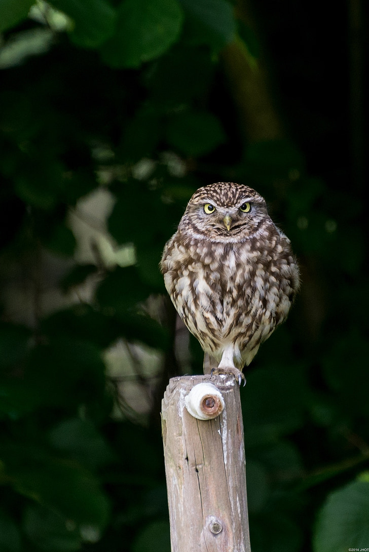owl perched on wooden pole
