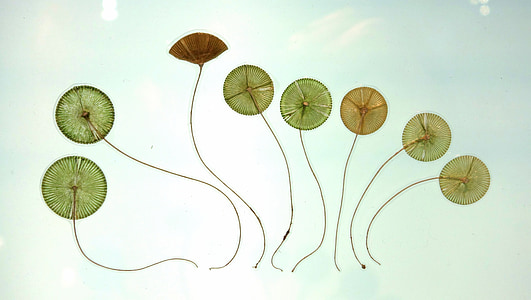 assorted green and brown kites painting