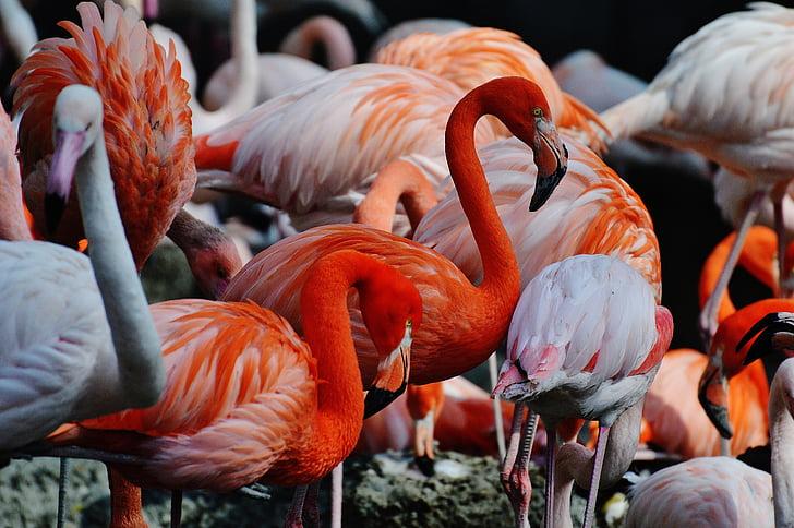 close-up photography of flamingos
