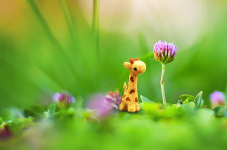 red clover flower beside mini giraffe toy in selective focus photography