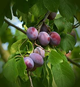 bundle of grape