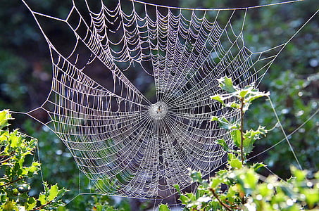 cobweb on leaf plant