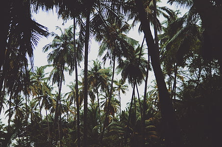 nature, palm trees, trees, palm tree, tree, day