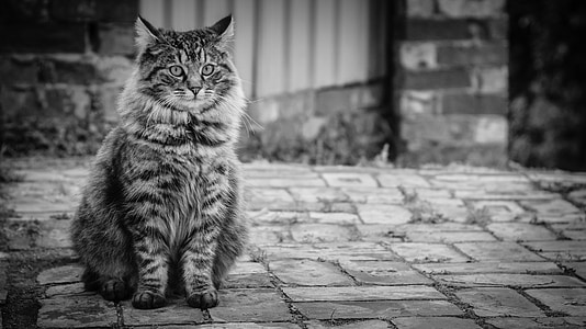grayscale photography of cat sitting on concrete pavement