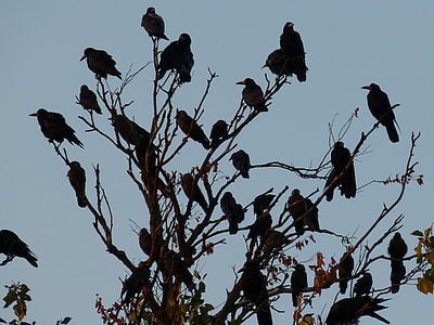 flock of bird perched on brown tree