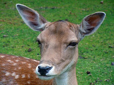 closeup photo of brown deer