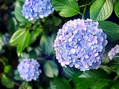 purple petaled flowers