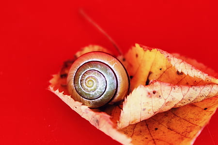 shallow focus photo of snail