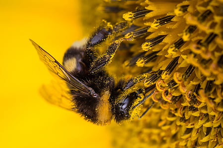 selective focus photo of bumble bee perching on yellow flower