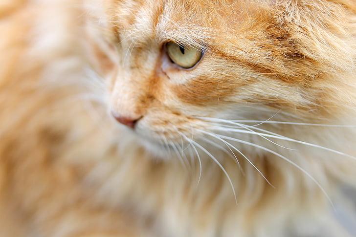 close-up photography of orange cat