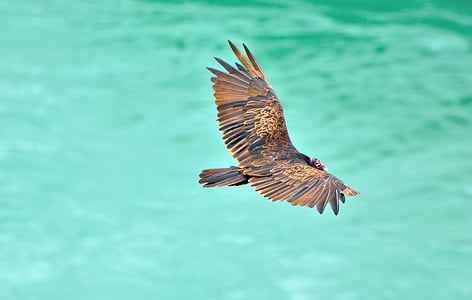 brown bird flying over the body of water during daytime