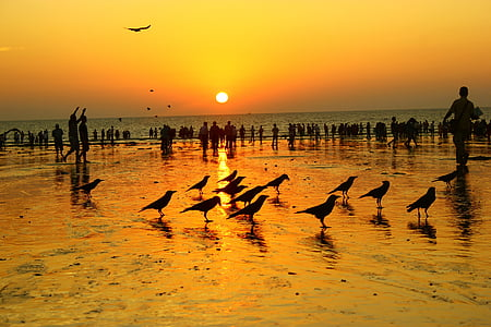 silhouette photo of crowd of people and flock of bird