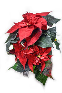 red and green leafed plant