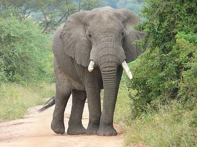 photo of gray elephant