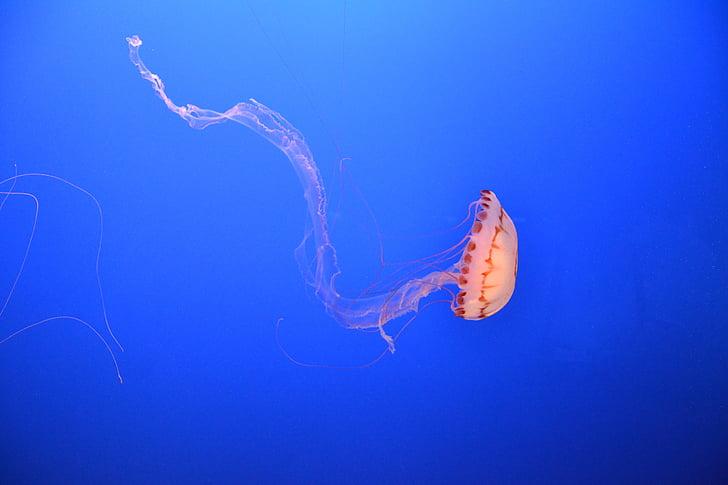 sea, ocean, underwater, jellyfish, aquarium, sealife
