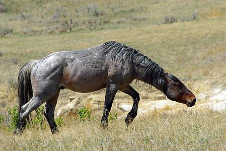 gray horse on green field