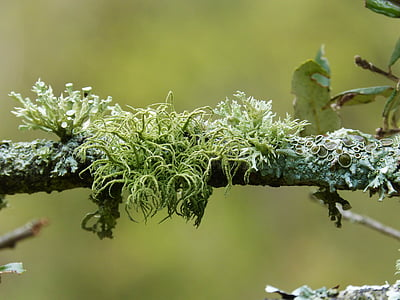 green grass on tree branch