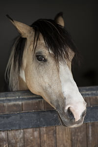 close-up photo of gray horse