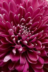closeup view of purple petaled flower