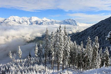snow on white mountains and trees