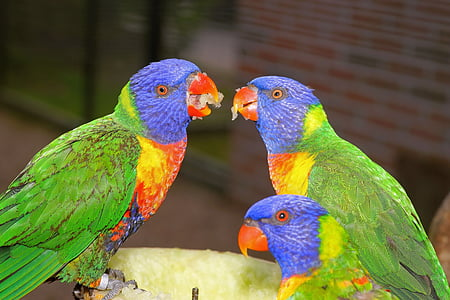 three green and blue birds