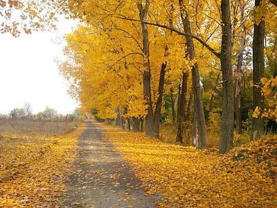 concrete road beside trees