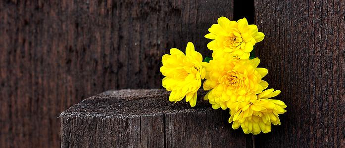 yellow mums flower arrangement