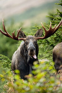 selective focus photography of moose