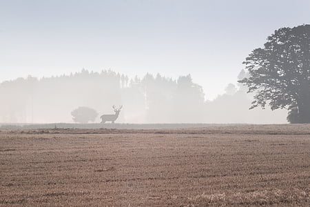 silhouette of deer on grass field surrounded by fogs during daytime
