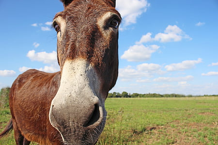 brown donkey on grass field during daytime
