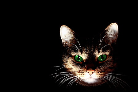 lighted orange tabby cat's face with black background
