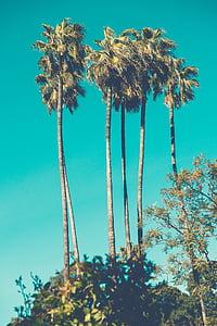 photo of six green coconut trees