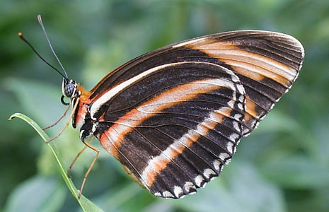 selective focus photography of black, brown, and white striped butterfly perched on green leaf