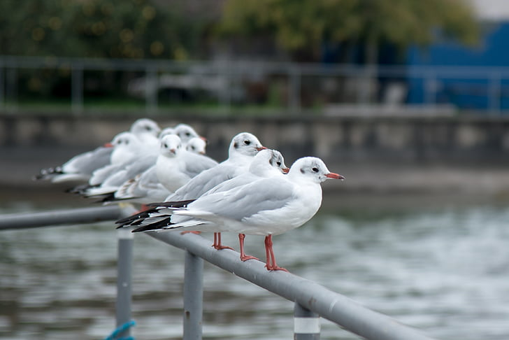 white birds on metal railing