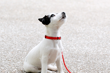 short-coated white and black puppy on gray asphalt road