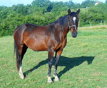 horse on green grass near trees