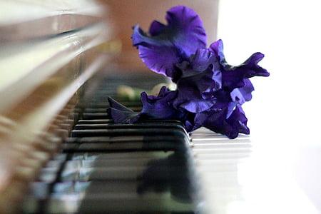 purple iris flowers on piano keys