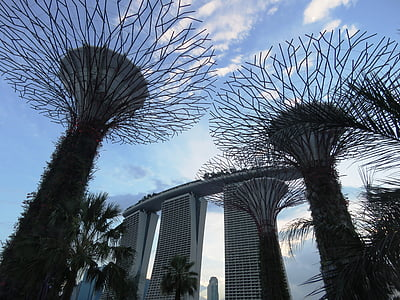 Supertree Grove, Garden by the Bay, Singapore