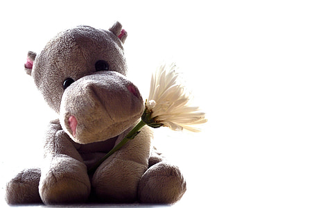 grey hippopotamus plush toy carrying white chrysanthemum isolated with white background