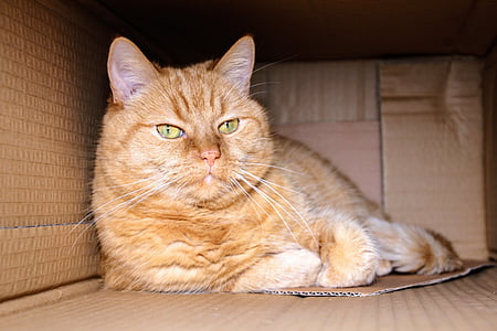 shallow focus photography of orange Tabby cat lying inside box