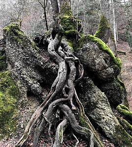 close view of tree roots