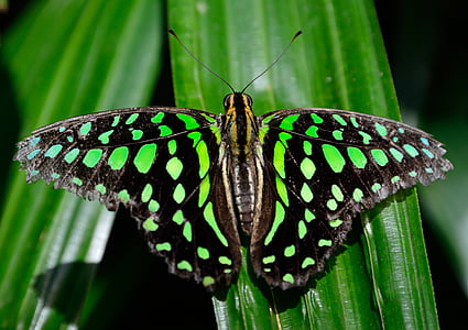 green and black butterfly on green leaf in closeup shot
