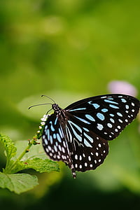 close up photo of white and black butterfly during daytime