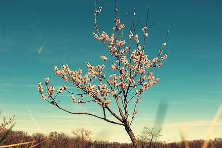 photo of white flowering tree