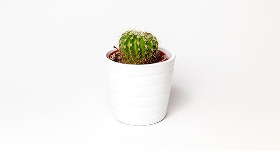 cactus plant in white vase